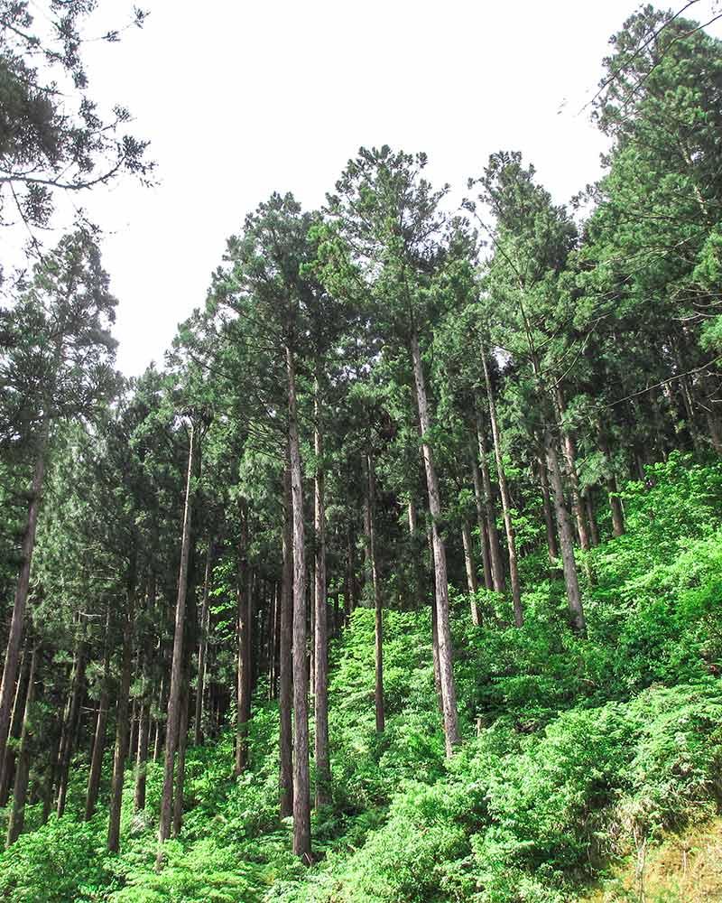 五泉市村松の木材